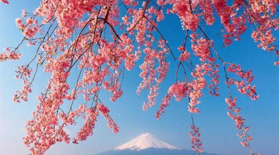 Fuji in der Kirschblüte - Sato Hitoshi
